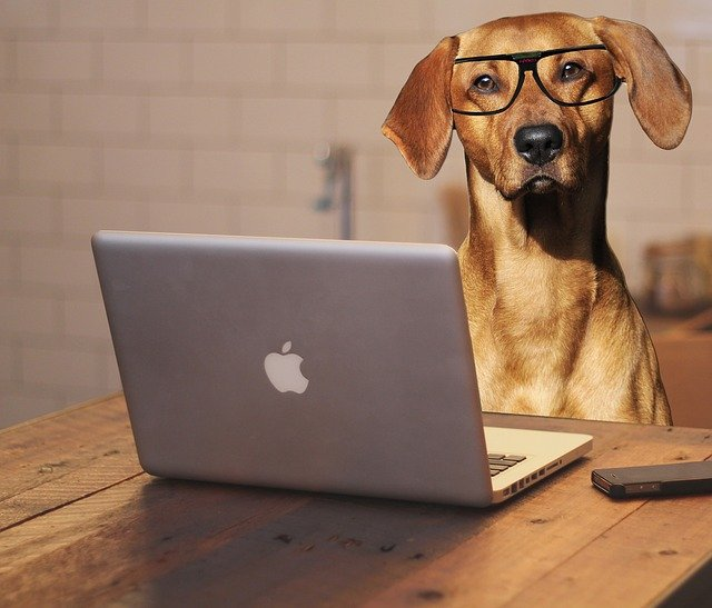 dog on macbook Toro is not a scam